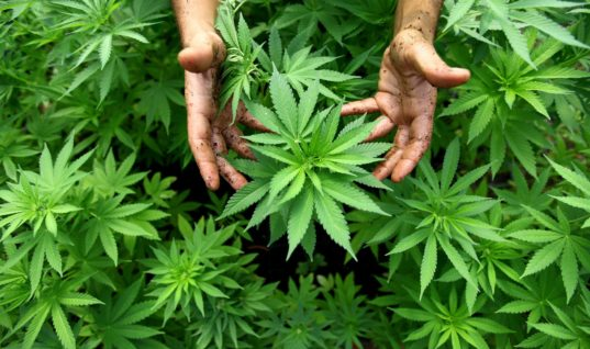 The Government Should Respect States' Decisions When it Comes to Marijuana Legislation