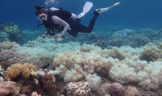 The Future of the Great Barrier Reef at Stake
