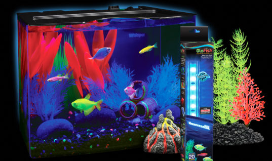 GloFish: Harmless Aquarium Pets or Genetically Modified Disaster?