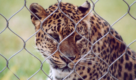 It's Time to Close All Zoos